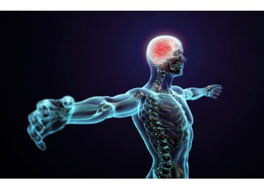 The endocannabinoid system (ECS) and our body